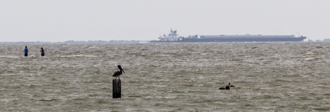 Goose Island-116