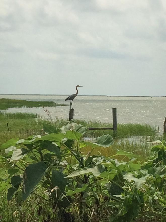 Goose Island-127